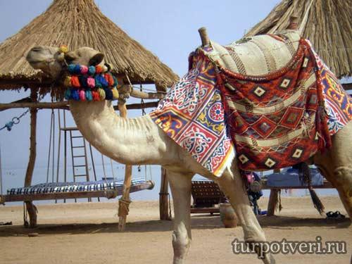Где купить тур в Египет
