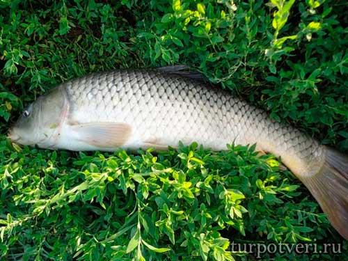 Рыбалка в Западной Двине