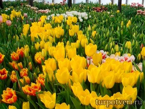 Музей тюльпанов в Стамбуле