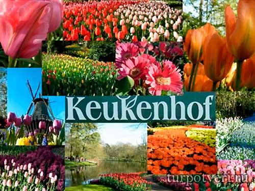 Парк цветов Кекенхоф открылся в Голландии