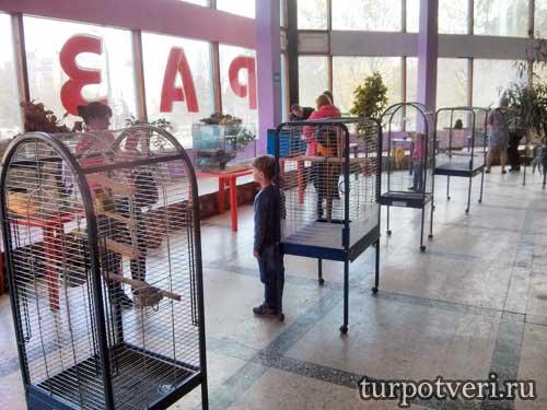 Попугаи на выставке животных в Тверском цирке