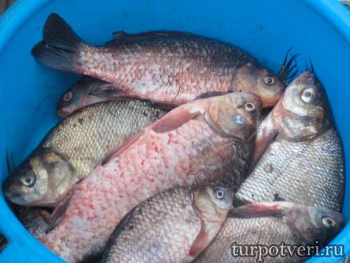 Рыбалка в Конаковском районе
