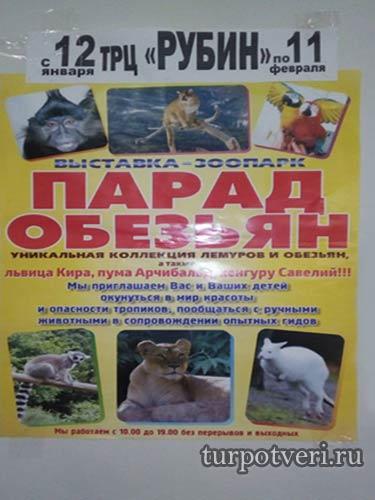 "выставка-зоопарк ""Парад обезьян"" в ТРЦ Рубин"