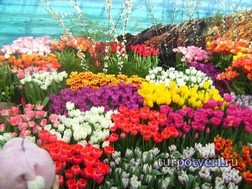 Выставка-продажа тюльпанов